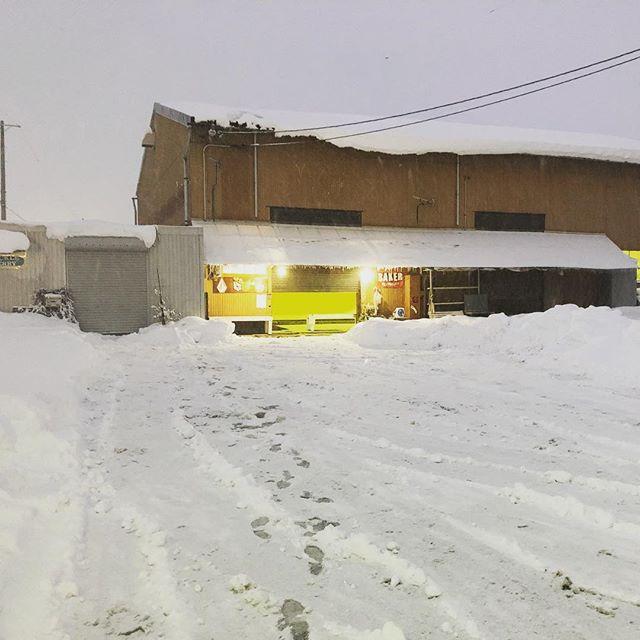 明日は朝イチからプライベートレッスンなので、夕方の雪かきです。こう見ると、夜のハックルベリーも風情ありますね^_^